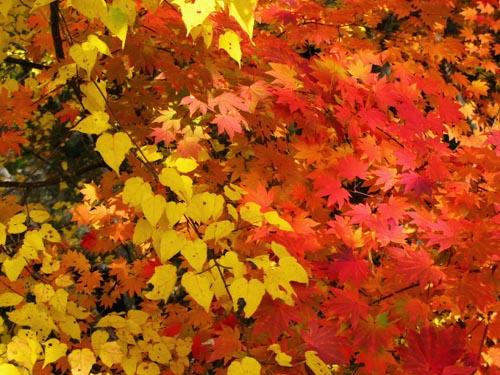 黄色と赤色 紅葉